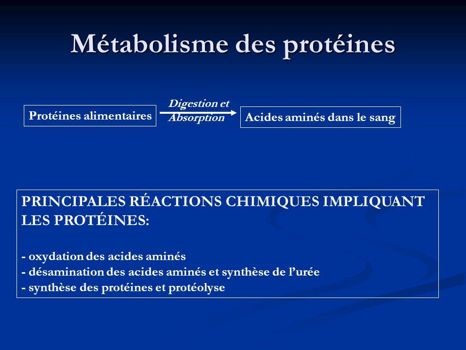 Métabolisme des protéines PRINCIPALES RÉACTIONS CHIMIQUES IMPLIQUANT LES PROTÉINES: - oxydation des acides aminés - désamination des acides aminés et