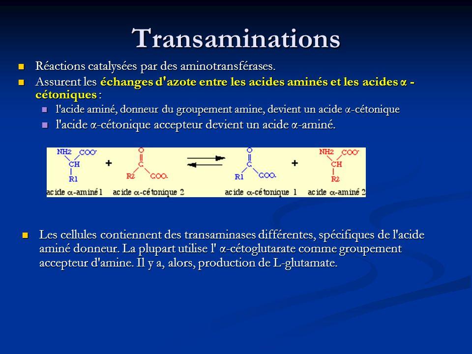 Transaminations Réactions catalysées par des aminotransférases. Réactions catalysées par des aminotransférases. Assurent les échanges d'azote entre le