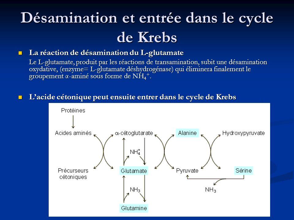 Désamination et entrée dans le cycle de Krebs La réaction de désamination du L-glutamate La réaction de désamination du L-glutamate Le L-glutamate, pr