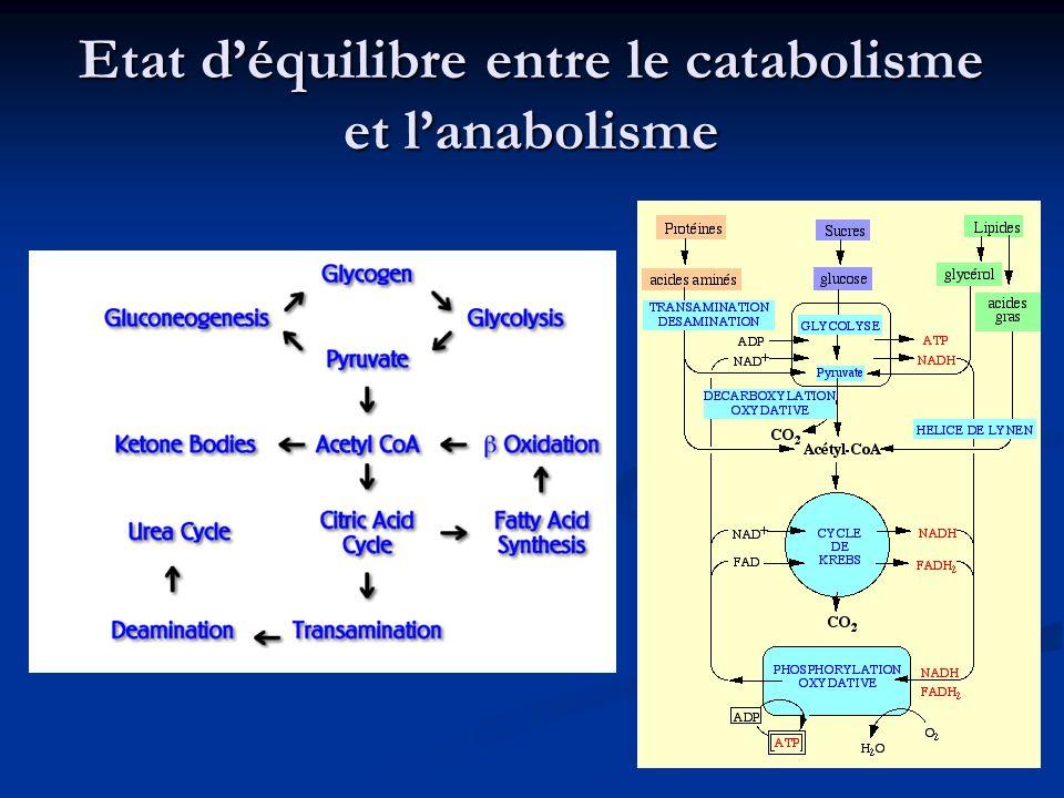 Etat déquilibre entre le catabolisme et lanabolisme