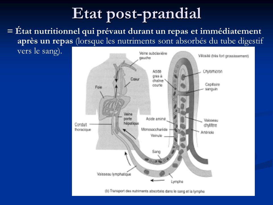 Etat post-prandial = État nutritionnel qui prévaut durant un repas et immédiatement après un repas (lorsque les nutriments sont absorbés du tube diges
