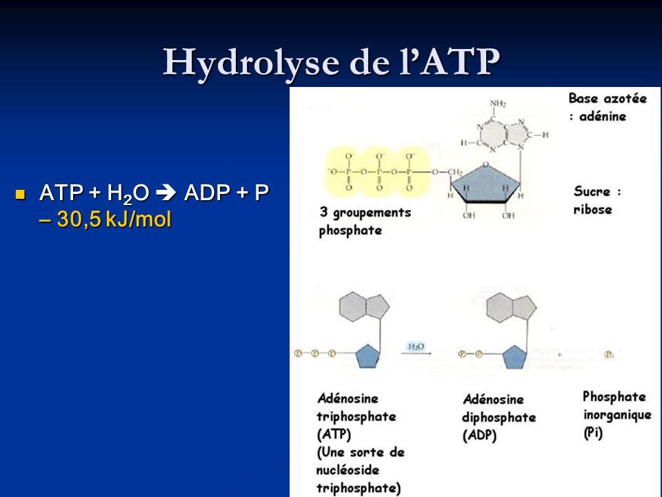 Hydrolyse de lATP ATP + H 2 O ADP + P – 30,5 kJ/mol ATP + H 2 O ADP + P – 30,5 kJ/mol