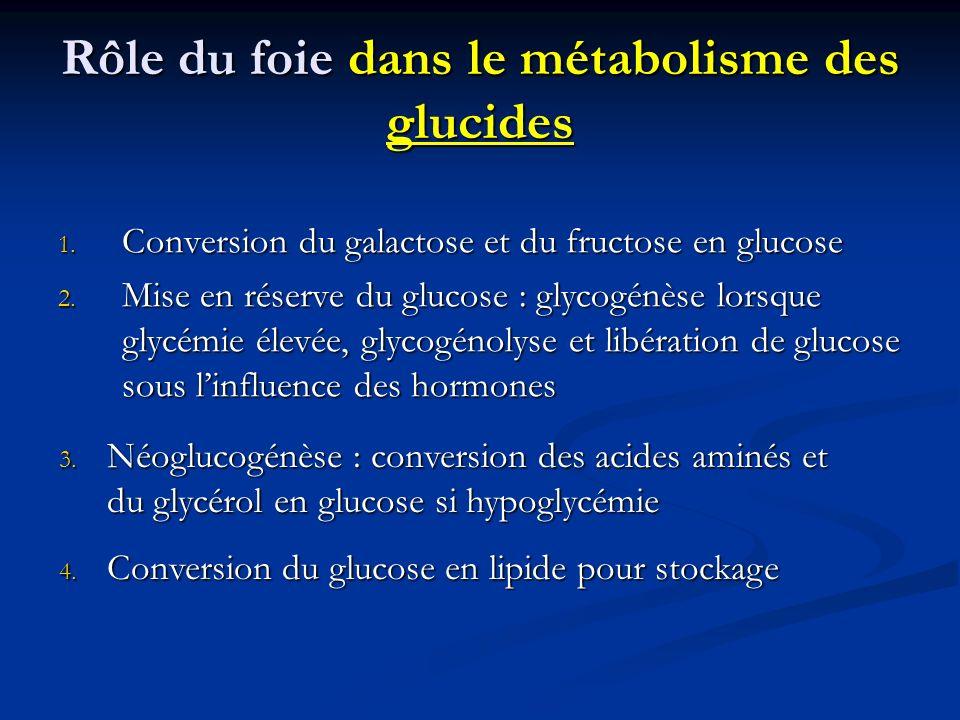 Rôle du foie dans le métabolisme des glucides 1. Conversion du galactose et du fructose en glucose 2. Mise en réserve du glucose : glycogénèse lorsque