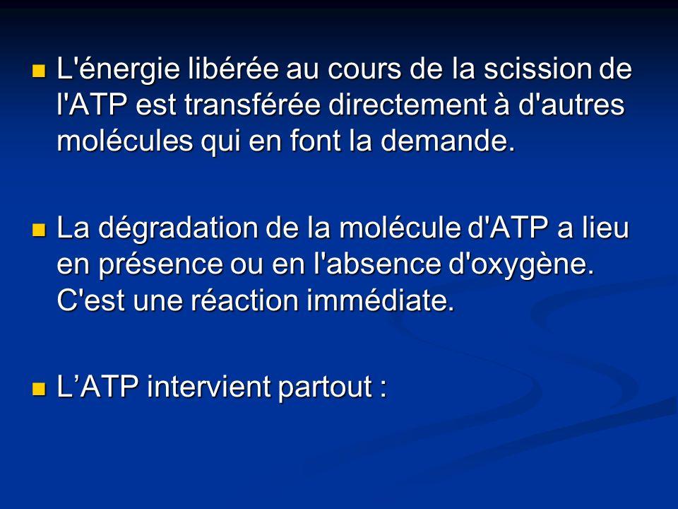 L'énergie libérée au cours de la scission de l'ATP est transférée directement à d'autres molécules qui en font la demande. L'énergie libérée au cours