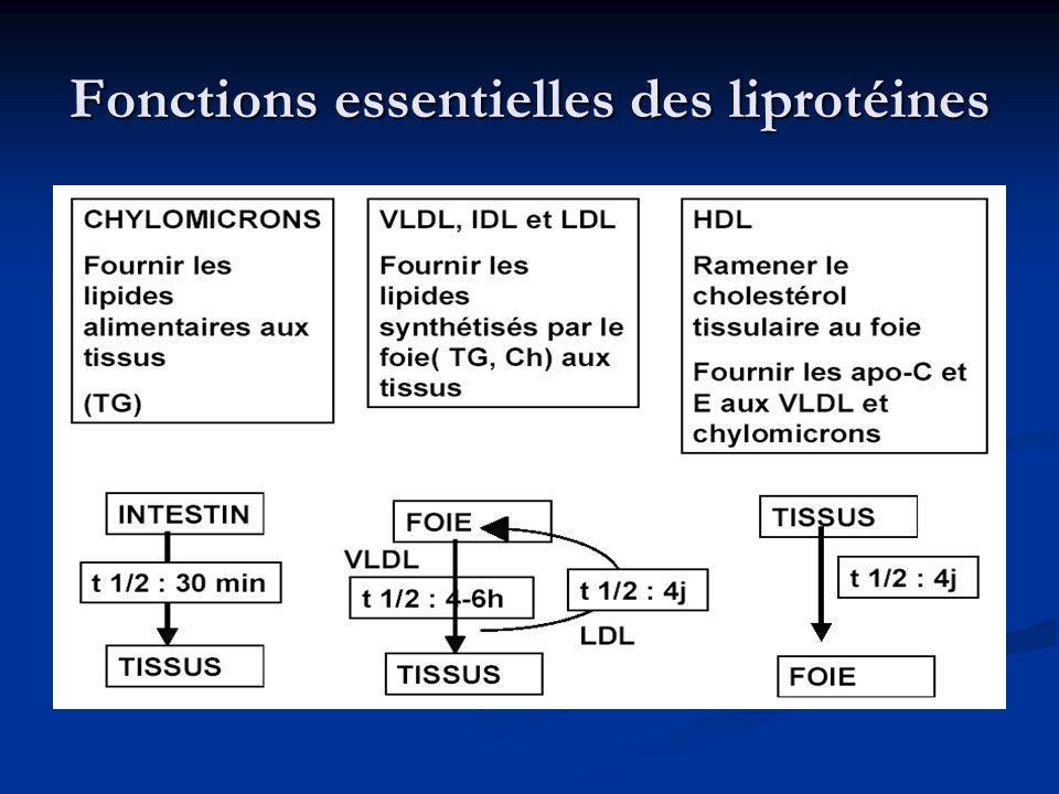 Fonctions essentielles des liprotéines