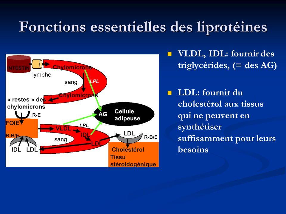 VLDL, IDL: fournir des triglycérides, (= des AG) LDL: fournir du cholestérol aux tissus qui ne peuvent en synthétiser suffisamment pour leurs besoins