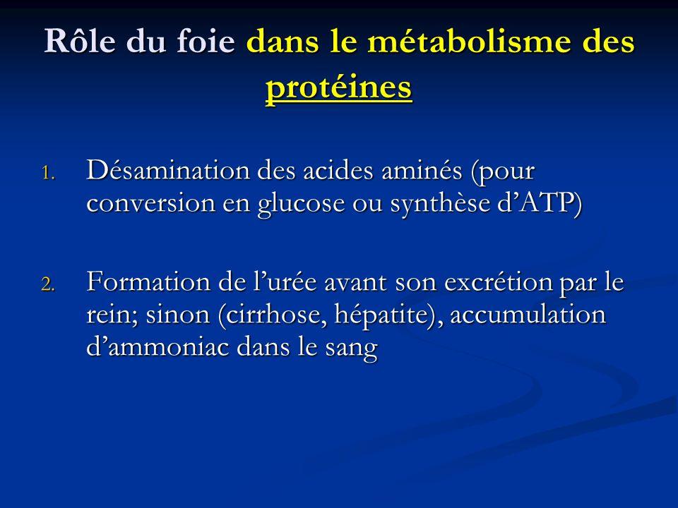 Rôle du foie dans le métabolisme des protéines 1. Désamination des acides aminés (pour conversion en glucose ou synthèse dATP) 2. Formation de lurée a