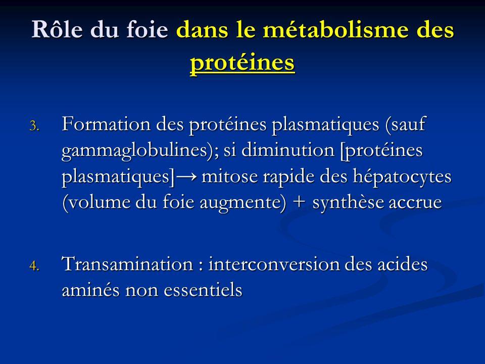 Rôle du foie dans le métabolisme des protéines 3. Formation des protéines plasmatiques (sauf gammaglobulines); si diminution [protéines plasmatiques]