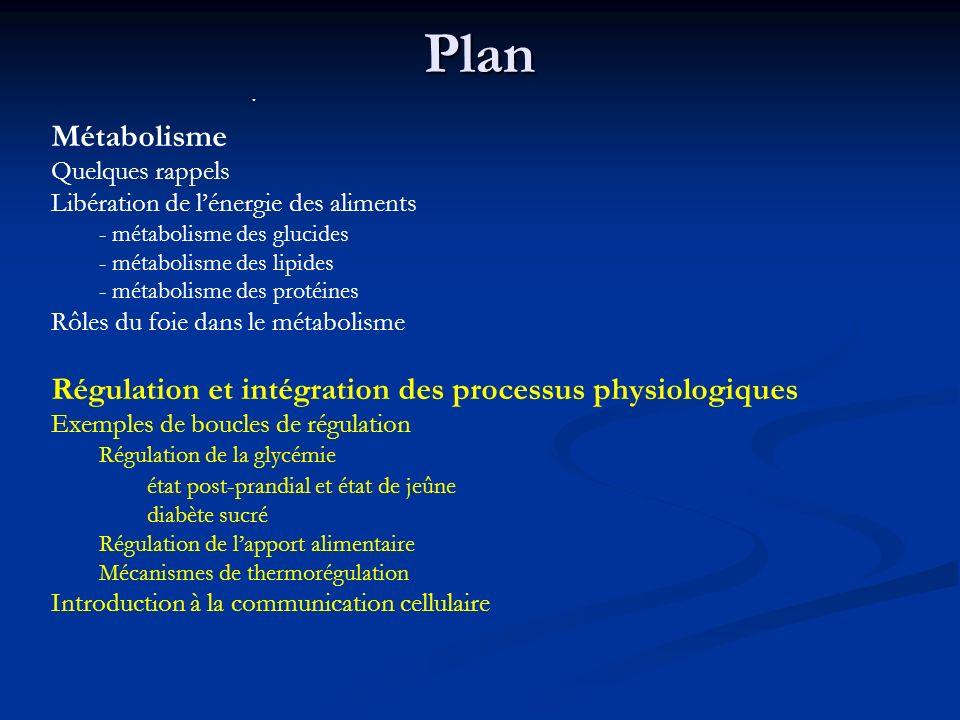 Plan Métabolisme Quelques rappels Libération de lénergie des aliments - métabolisme des glucides - métabolisme des lipides - métabolisme des protéines