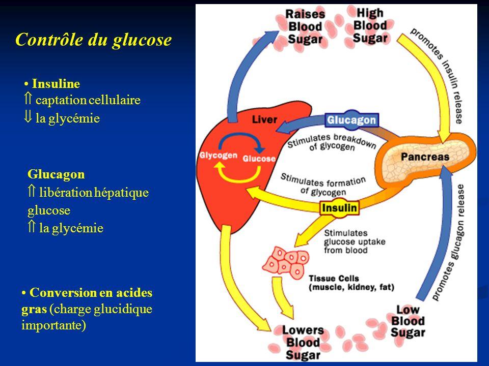 Insuline captation cellulaire la glycémie Glucagon libération hépatique glucose la glycémie Conversion en acides gras (charge glucidique importante) C