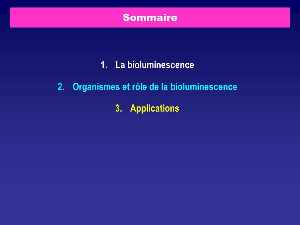 Sommaire 1. La bioluminescence 2.Organismes et rôle de la bioluminescence 3. Applications