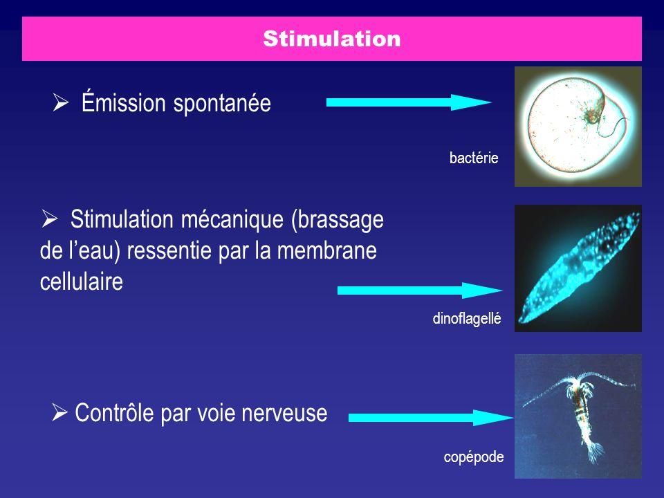 Stimulation Émission spontanée Stimulation mécanique (brassage de leau) ressentie par la membrane cellulaire Contrôle par voie nerveuse bactérie dinof