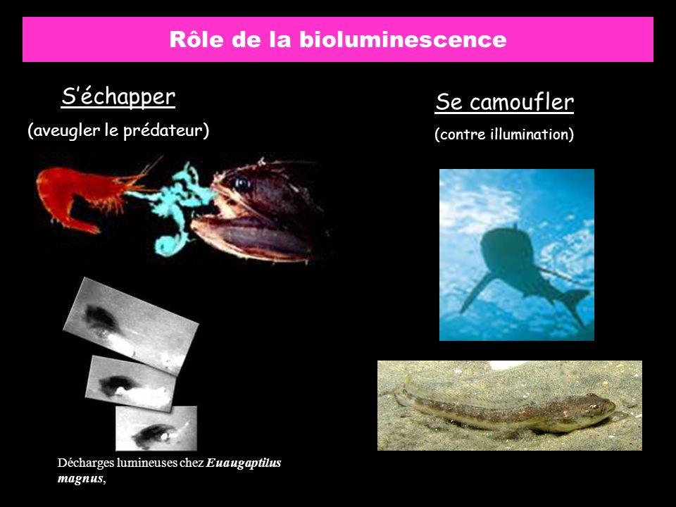 Rôle de la bioluminescence Séchapper (aveugler le prédateur) Se camoufler (contre illumination) Décharges lumineuses chez Euaugaptilus magnus,