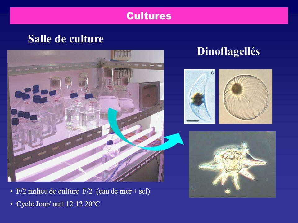 Cultures Salle de culture Dinoflagellés F/2 milieu de culture F/2 (eau de mer + sel) Cycle Jour/ nuit 12:12 20°C
