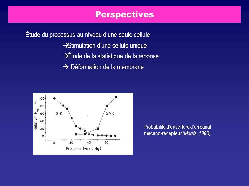 Perspectives Étude du processus au niveau dune seule cellule Stimulation dune cellule unique Étude de la statistique de la réponse Déformation de la m