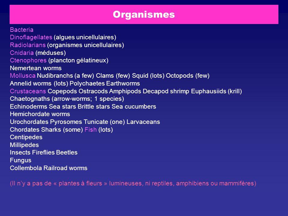 Organismes Bacteria Dinoflagellates (algues unicellulaires) Radiolarians (organismes unicellulaires) Cnidaria (méduses) Ctenophores (plancton gélatine