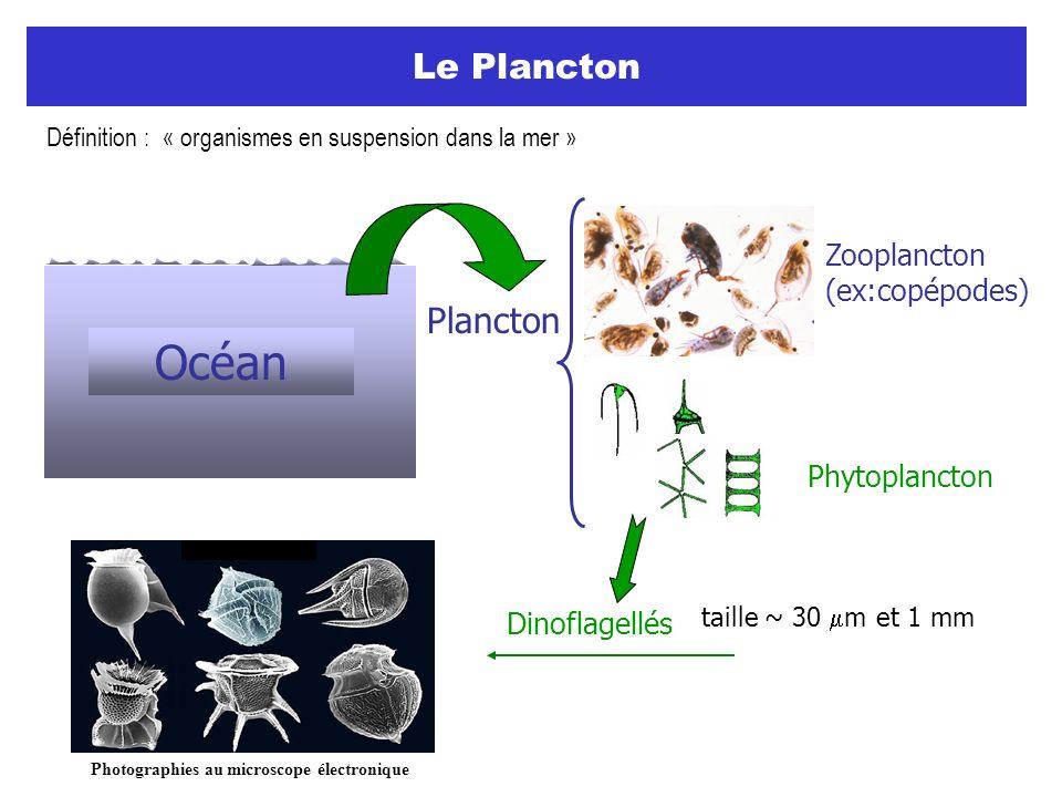 Le Plancton Plancton Zooplancton (ex:copépodes) Phytoplancton Dinoflagellés Photographies au microscope électronique Océan taille ~ 30 m et 1 mm Défin
