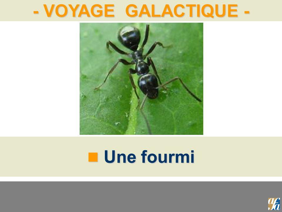 - VOYAGE GALACTIQUE - Une fourmi Une fourmi