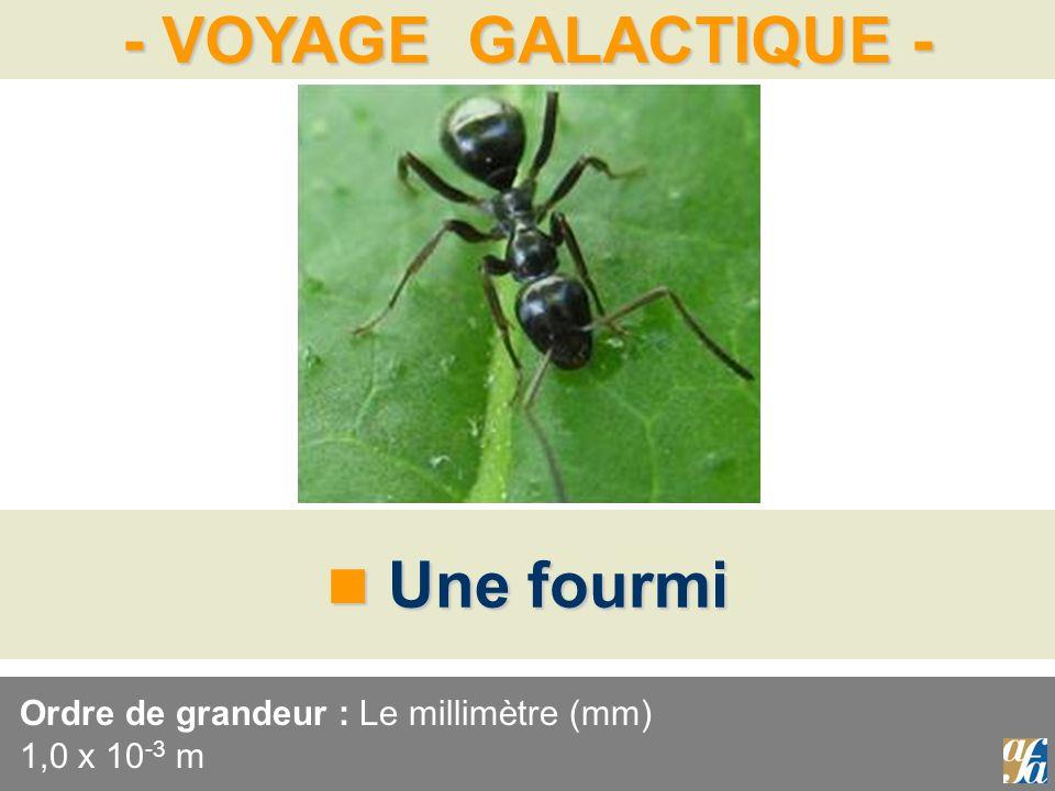 - VOYAGE GALACTIQUE - Une fourmi Une fourmi Ordre de grandeur : Le millimètre (mm) 1,0 x 10 -3 m