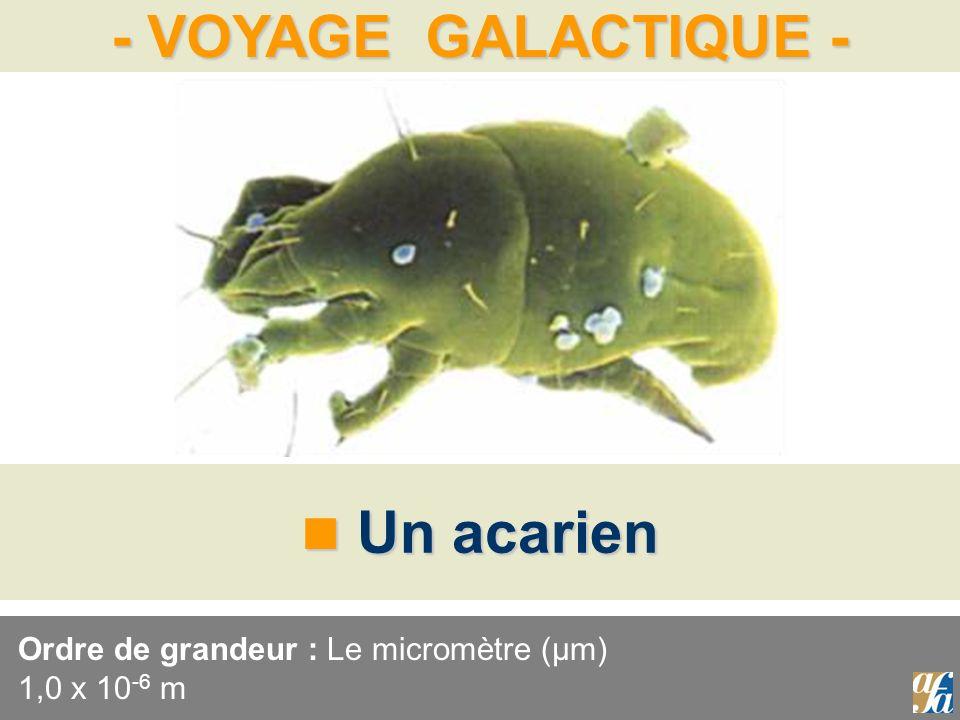 - VOYAGE GALACTIQUE - Un acarien Un acarien Ordre de grandeur : Le micromètre (μm) 1,0 x 10 -6 m