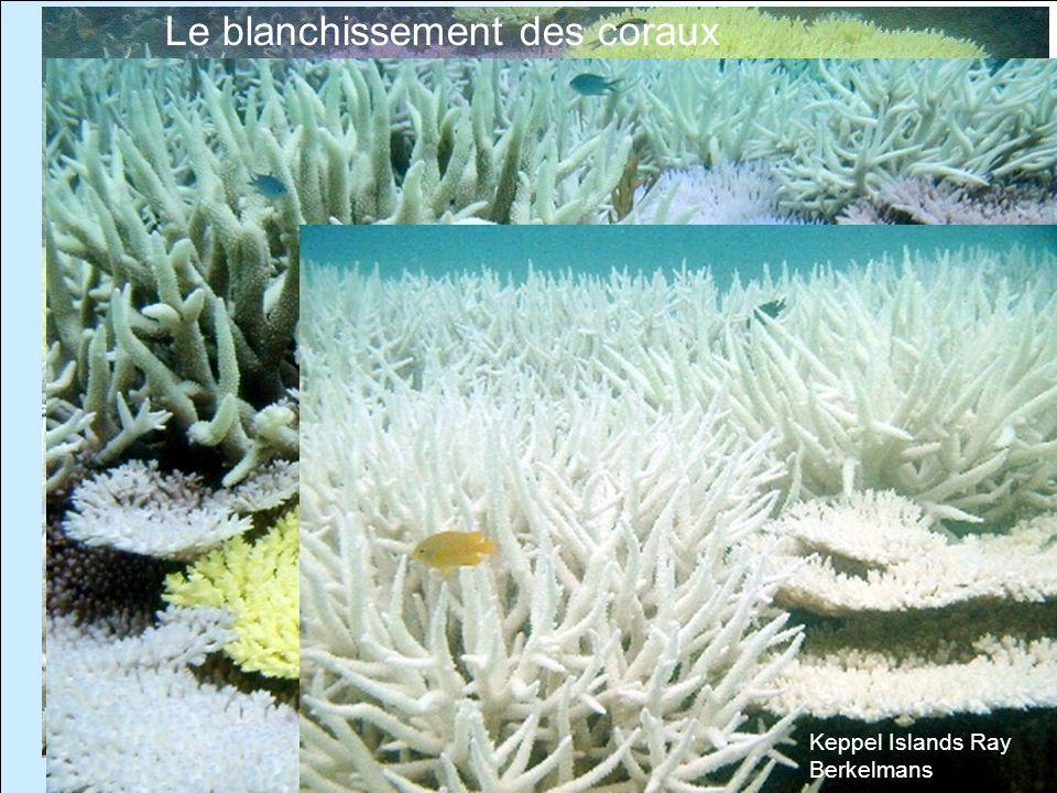 Formaterre 23 et 24 octobre 20065 Keppel Islands Ray Berkelmans Le blanchissement des coraux Keppel Islands Ray Berkelmans