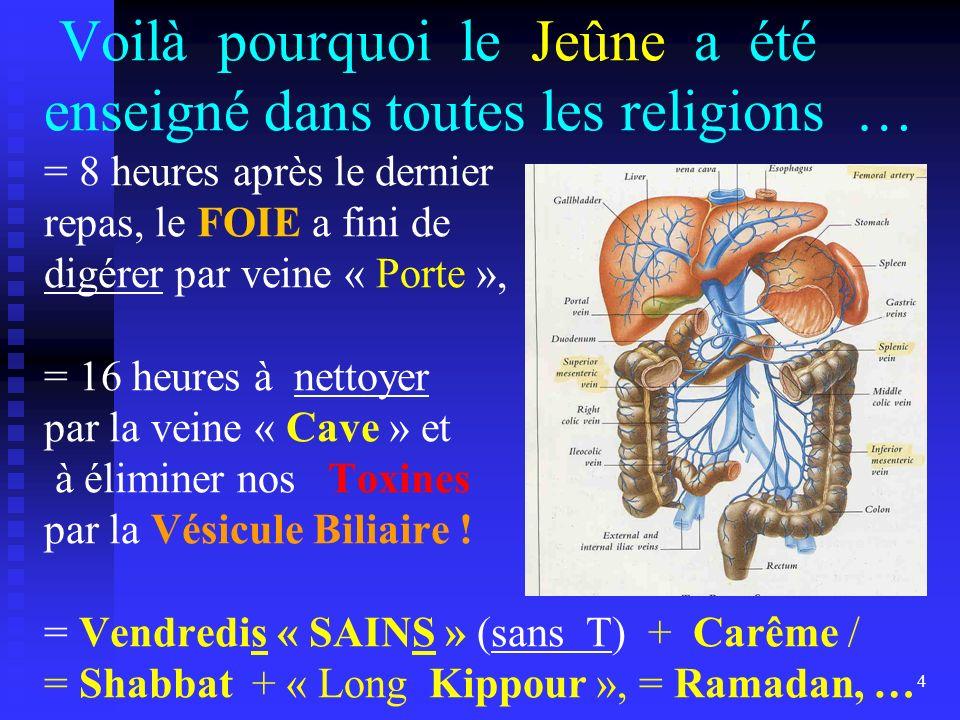 Voilà pourquoi le Jeûne a été enseigné dans toutes les religions … = 8 heures après le dernier repas, le FOIE a fini de digérer par veine « Porte », =