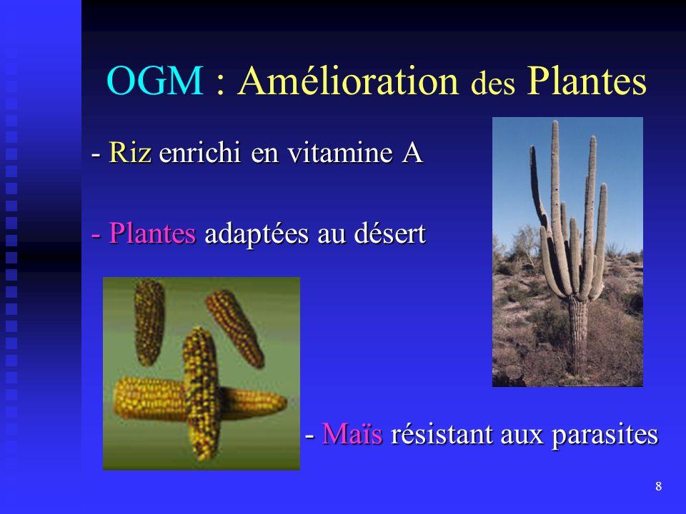 8 OGM : Amélioration des Plantes - Riz enrichi en vitamine A - Plantes adaptées au désert - Maïs résistant aux parasites - Maïs résistant aux parasite
