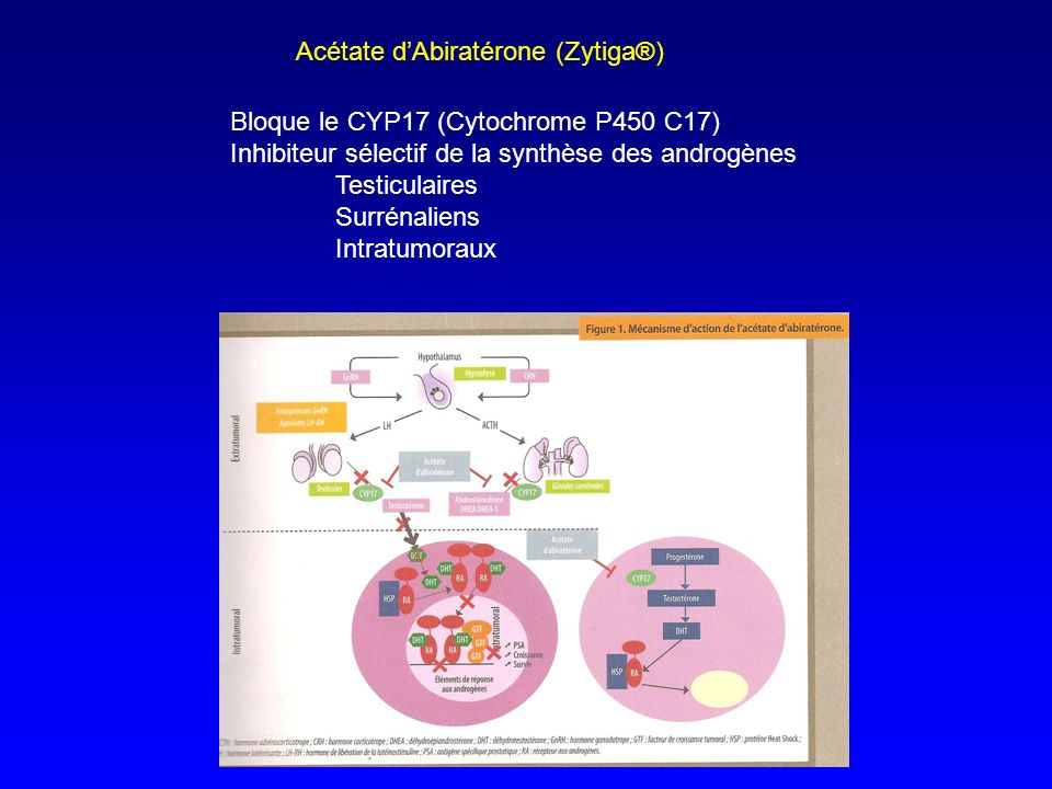 Acétate dAbiratérone (Zytiga®) Bloque le CYP17 (Cytochrome P450 C17) Inhibiteur sélectif de la synthèse des androgènes Testiculaires Surrénaliens Intr