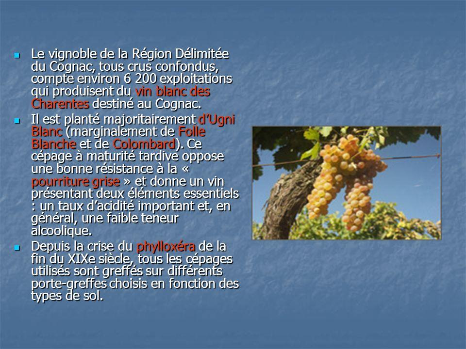 Le vignoble de la Région Délimitée du Cognac, tous crus confondus, compte environ 6 200 exploitations qui produisent du vin blanc des Charentes destin