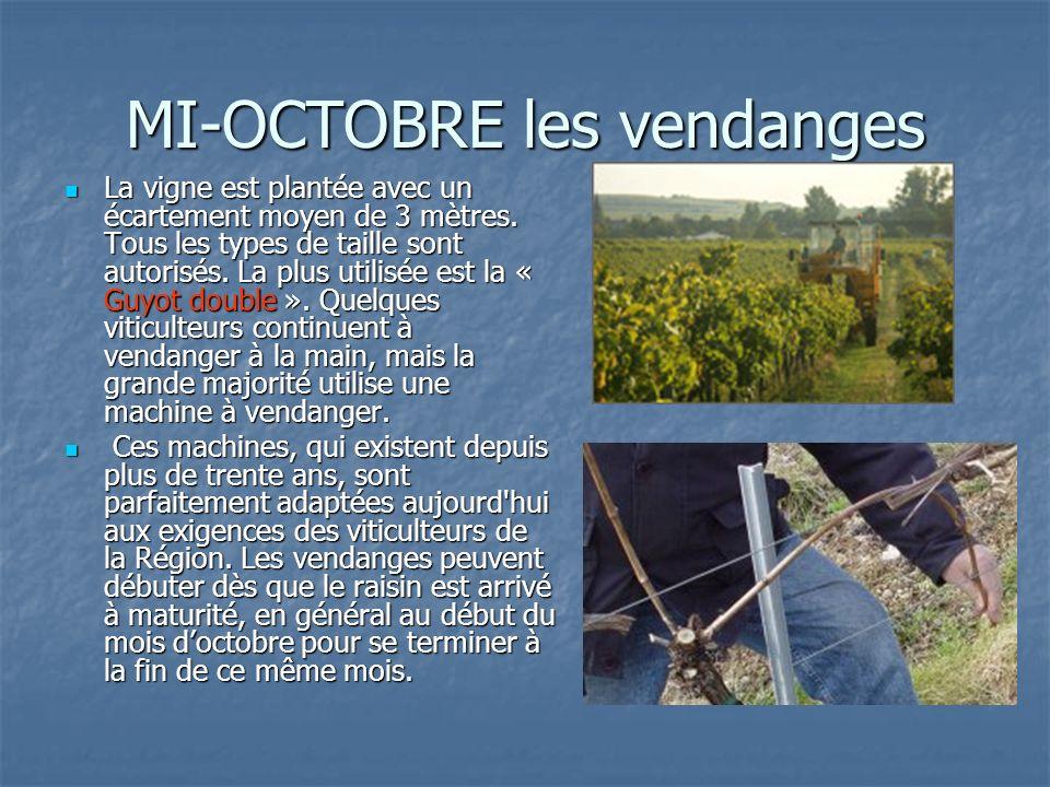 MI-OCTOBRE les vendanges La vigne est plantée avec un écartement moyen de 3 mètres. Tous les types de taille sont autorisés. La plus utilisée est la «