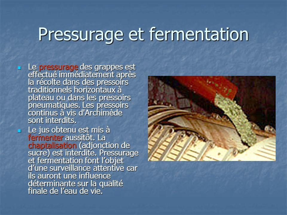 Pressurage et fermentation Le pressurage des grappes est effectué immédiatement après la récolte dans des pressoirs traditionnels horizontaux à platea