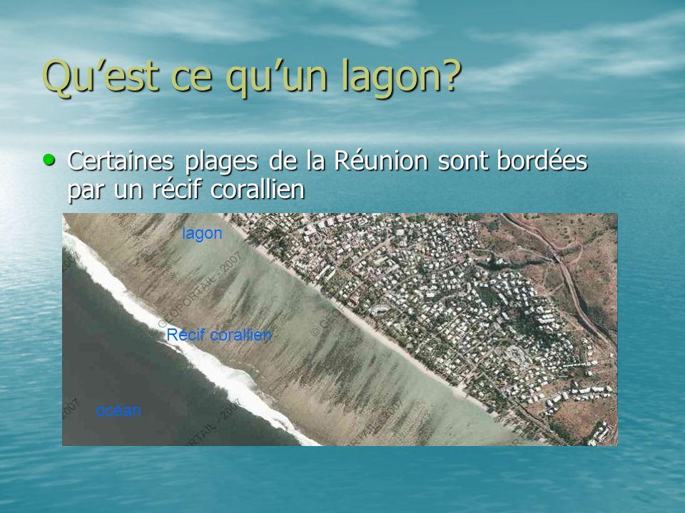 Quest ce quun lagon? Certaines plages de la Réunion sont bordées par un récif corallien Certaines plages de la Réunion sont bordées par un récif coral