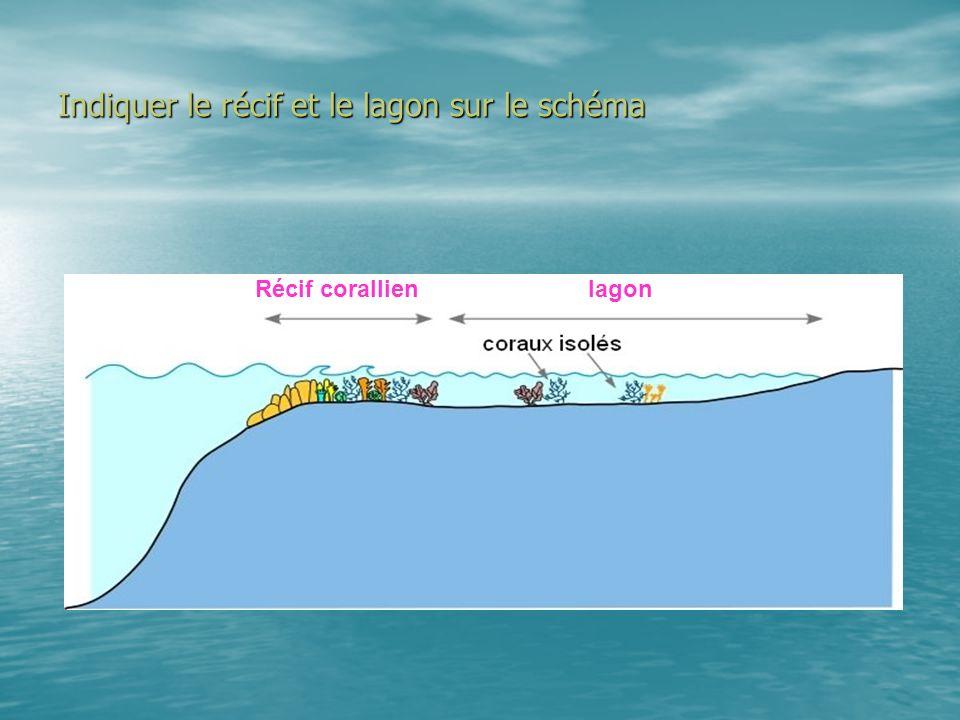 Indiquer le récif et le lagon sur le schéma Récif corallienlagon