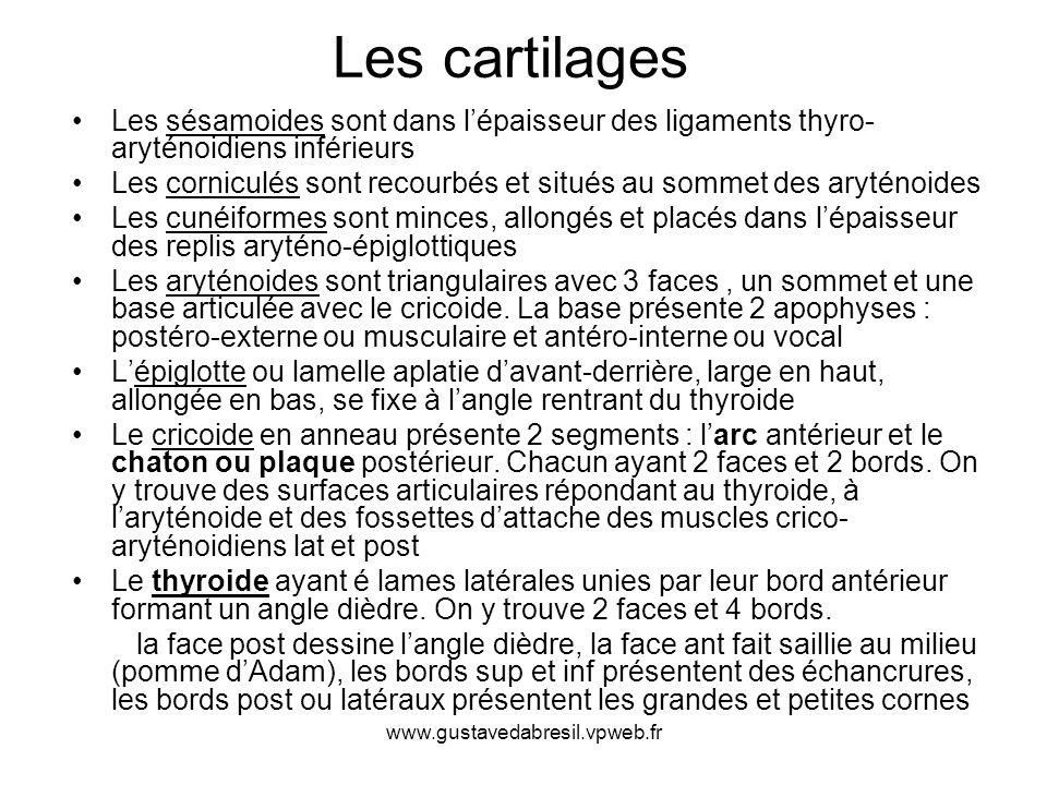www.gustavedabresil.vpweb.fr Les sésamoides sont dans lépaisseur des ligaments thyro- aryténoidiens inférieurs Les corniculés sont recourbés et situés