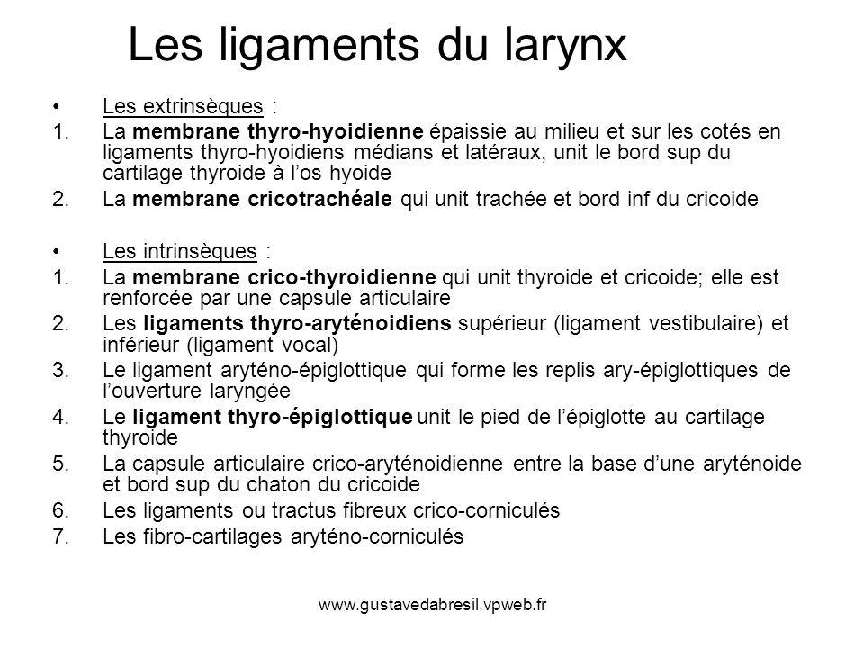 www.gustavedabresil.vpweb.fr Les ligaments les plus importants du larynx : 1.le ligament vocal (corde vocale) est tendu entre le cartilage aryténoïde et l intérieur du cartilage thyroïde ;cartilage aryténoïde 2.le ligament vestibulaire relie également ces deux cartilages, mais en position supérieure au ligament vocal, c est la fausse corde vocale ; 3.le ligament aryténo- épiglottique relie les cartilages du même nom et constitue la circonférence supérieure du conduit laryngé ; 4.les ligaments hyo-épiglottique et thyro-épiglottique stabilisent le cartilage épiglottique dans ses mouvements.