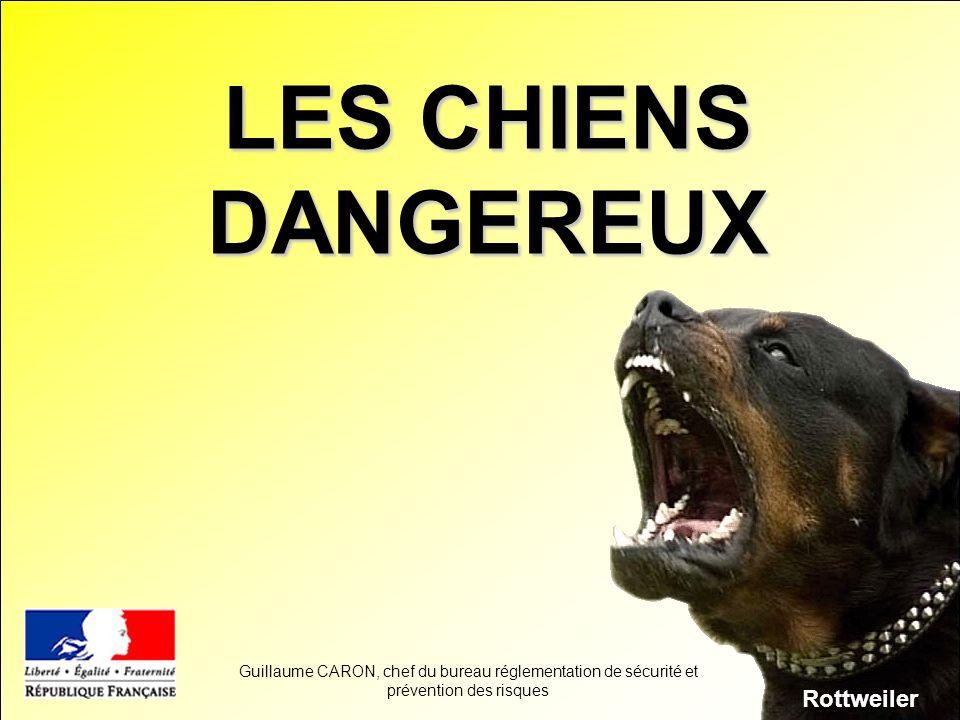 LES CHIENS DANGEREUX Rottweiler Guillaume CARON, chef du bureau réglementation de sécurité et prévention des risques