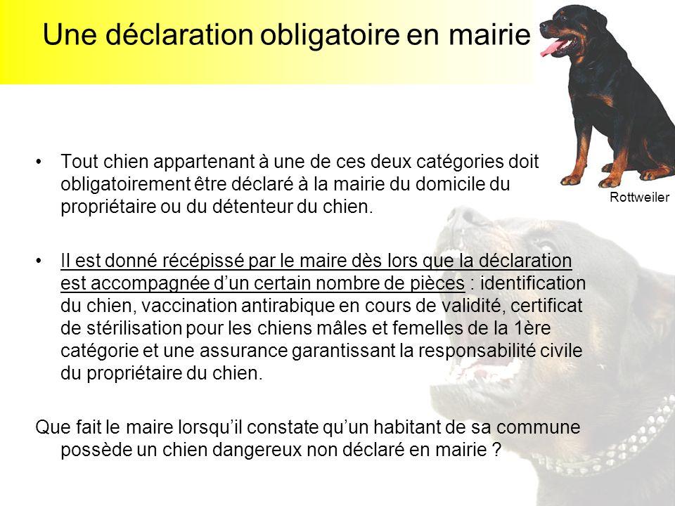 Une déclaration obligatoire en mairie Tout chien appartenant à une de ces deux catégories doit obligatoirement être déclaré à la mairie du domicile du