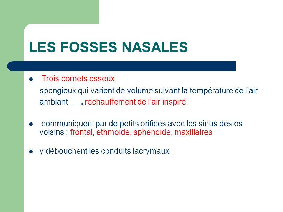 LES FOSSES NASALES Trois cornets osseux spongieux qui varient de volume suivant la température de lair ambiant réchauffement de lair inspiré. communiq