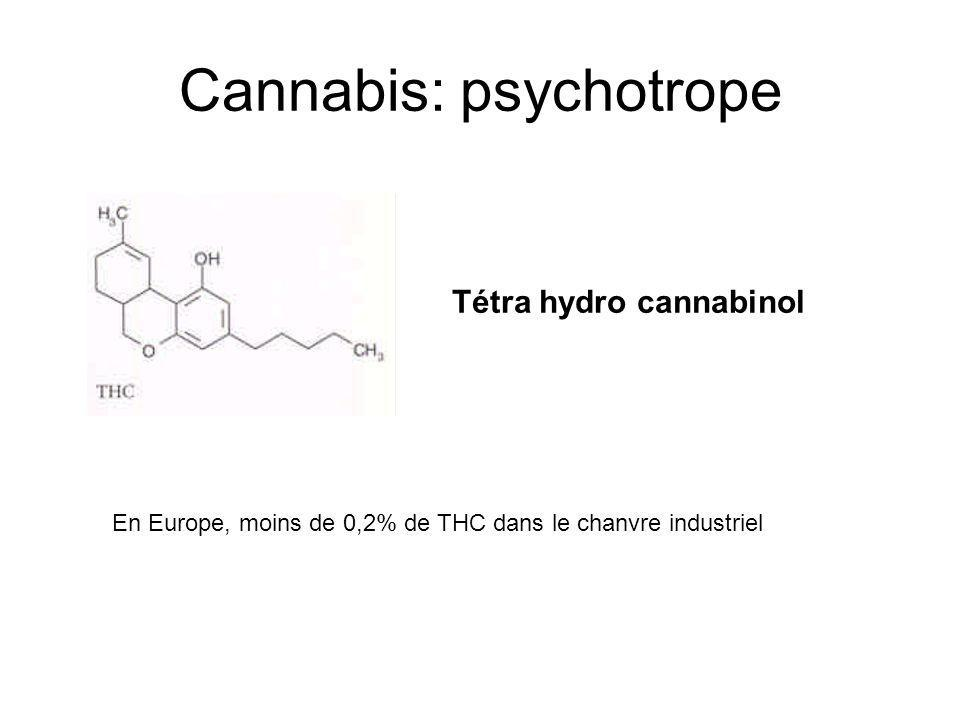 Cannabis: psychotrope Tétra hydro cannabinol En Europe, moins de 0,2% de THC dans le chanvre industriel