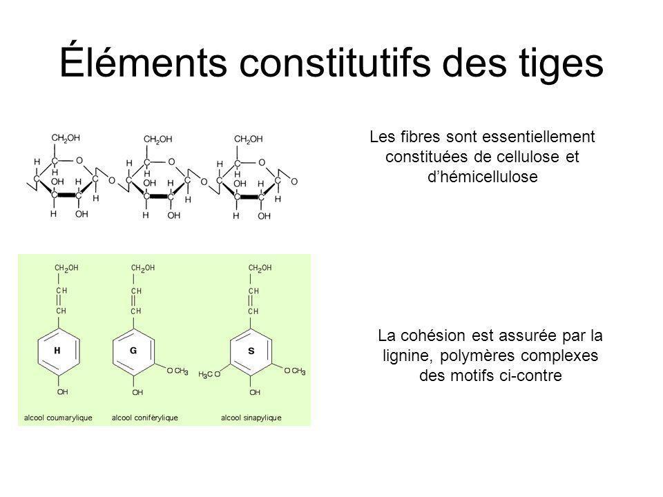Éléments constitutifs des tiges Les fibres sont essentiellement constituées de cellulose et dhémicellulose La cohésion est assurée par la lignine, pol