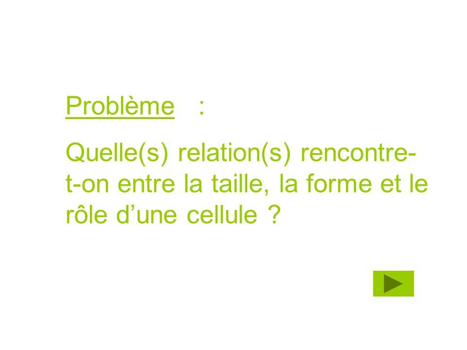 Problème : Quelle(s) relation(s) rencontre- t-on entre la taille, la forme et le rôle dune cellule ?