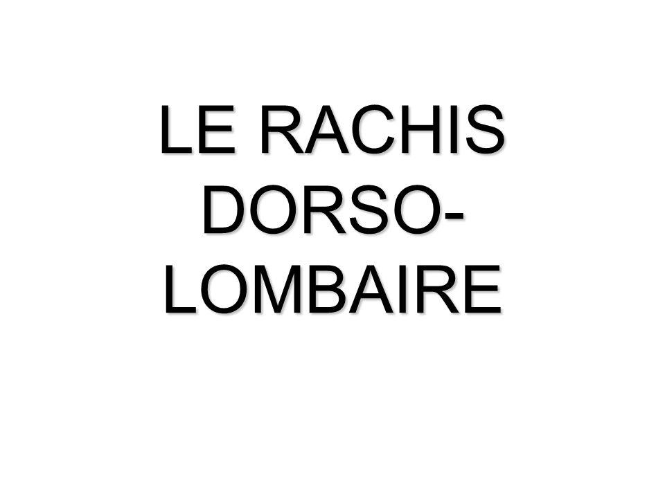 LE RACHIS DORSO- LOMBAIRE