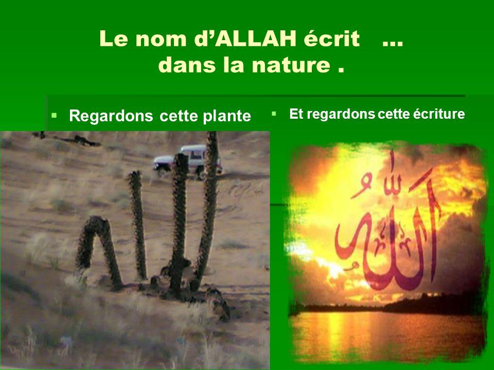 Le nom dALLAH écrit … dans la nature. Regardons cette plante …….. …….. ……. …….. Et regardons cette écriture