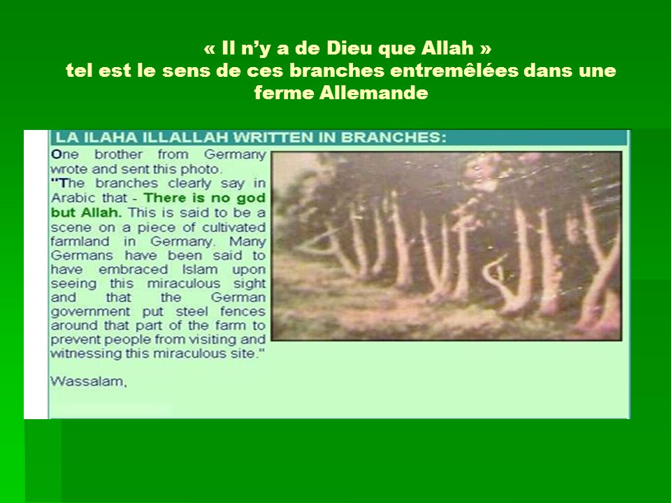 « Il ny a de Dieu que Allah » tel est le sens de ces branches entremêlées dans une ferme Allemande
