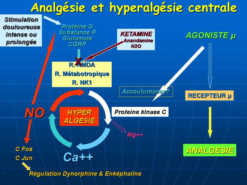 Analgésie et hyperalgésie centrale HYPERALGESIE R. NMDA R. Métabotropique R. NK1 Proteine kinase C Protéine G Substance P GlutamateCGRPNO Ca++ Mg++ C