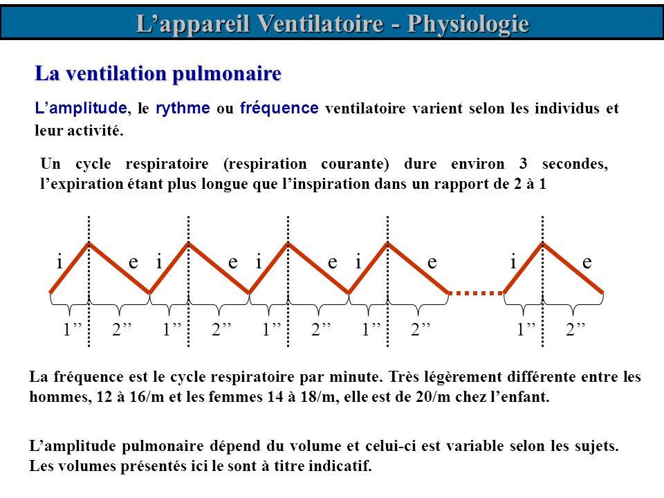 La ventilation pulmonaire Lamplitude pulmonaire dépend du volume et celui-ci est variable selon les sujets. Les volumes présentés ici le sont à titre