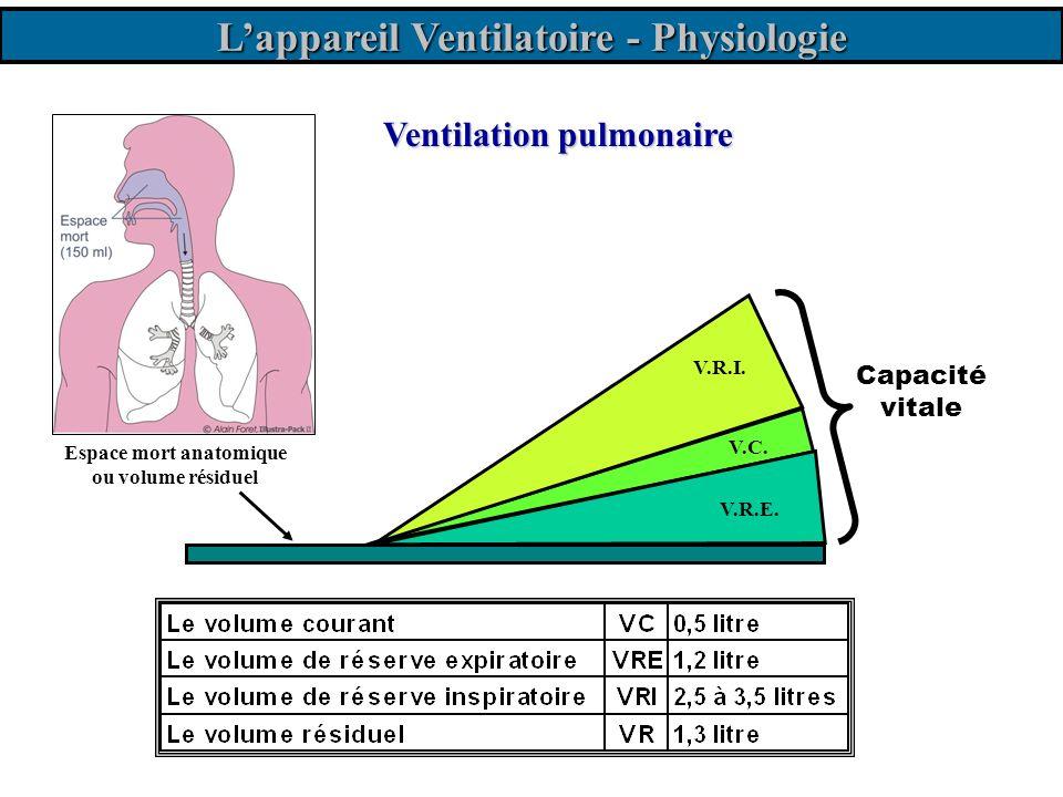 Ventilation pulmonaire V.C. Capacité vitale Espace mort anatomique ou volume résiduel V.R.E. V.R.I. Lappareil Ventilatoire - Physiologie