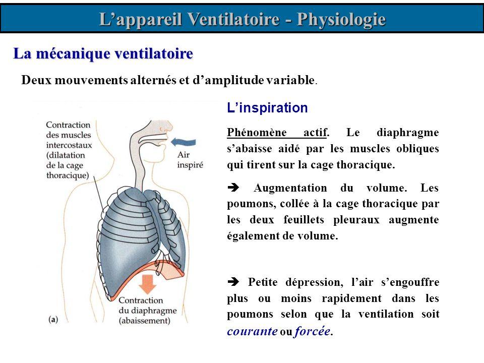 La mécanique ventilatoire Deux mouvements alternés et damplitude variable. Linspiration Phénomène actif. Le diaphragme sabaisse aidé par les muscles o