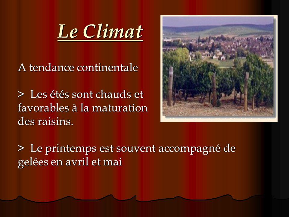 Le Climat A tendance continentale > Les étés sont chauds et favorables à la maturation des raisins. > Le printemps est souvent accompagné de gelées en