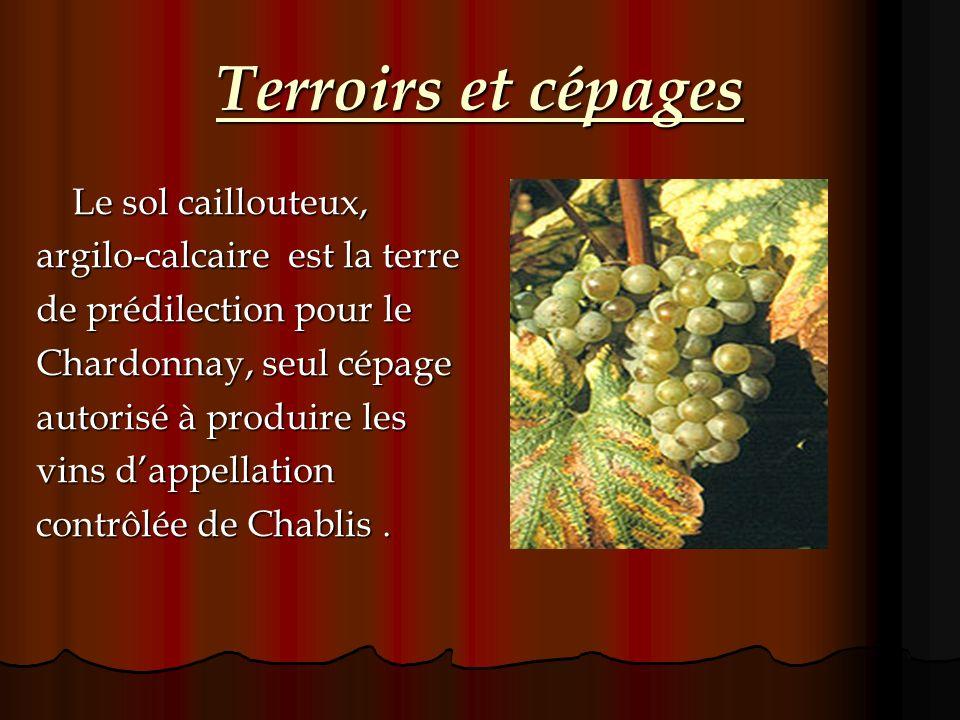 Terroirs et cépages Le sol caillouteux, argilo-calcaire est la terre de prédilection pour le Chardonnay, seul cépage autorisé à produire les vins dapp